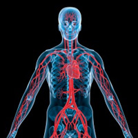 research reveals why diabetes patients are at risk for microvascular complications