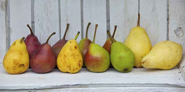 Red Yellow Green Pears